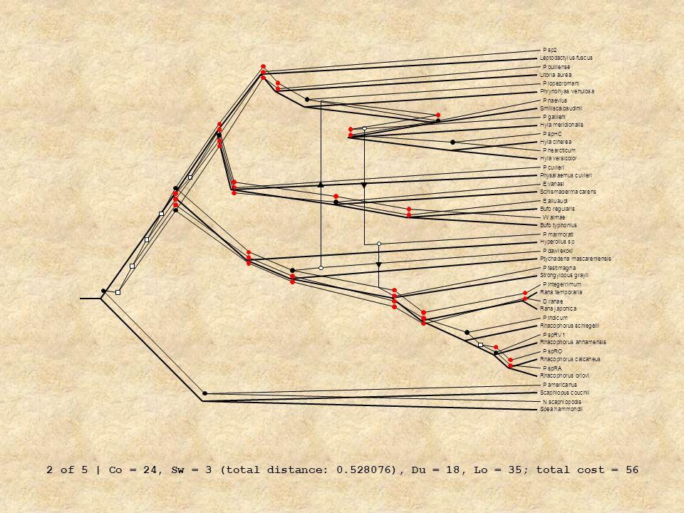 P integerrimum P dawiekoki. P gallieni. P testimagna. P marmorati. P lopezromani. P naevius. P nearcticum.