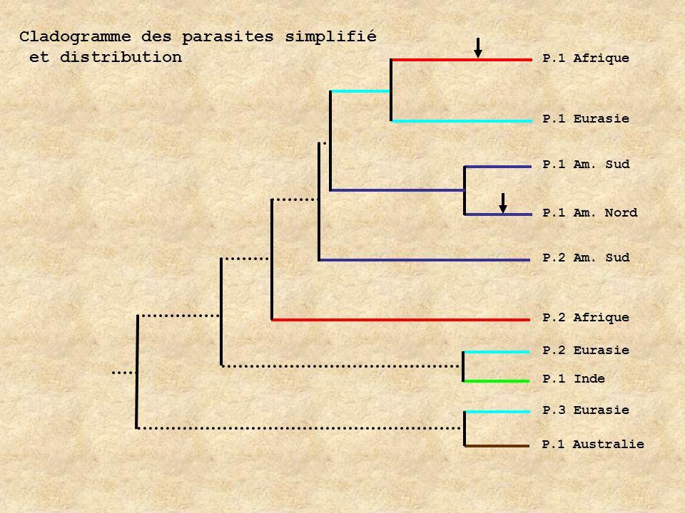 Cladogramme des parasites simplifié et distribution
