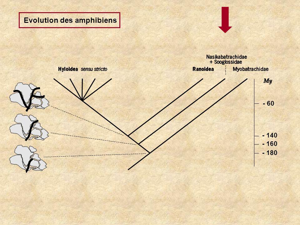 Evolution des amphibiens