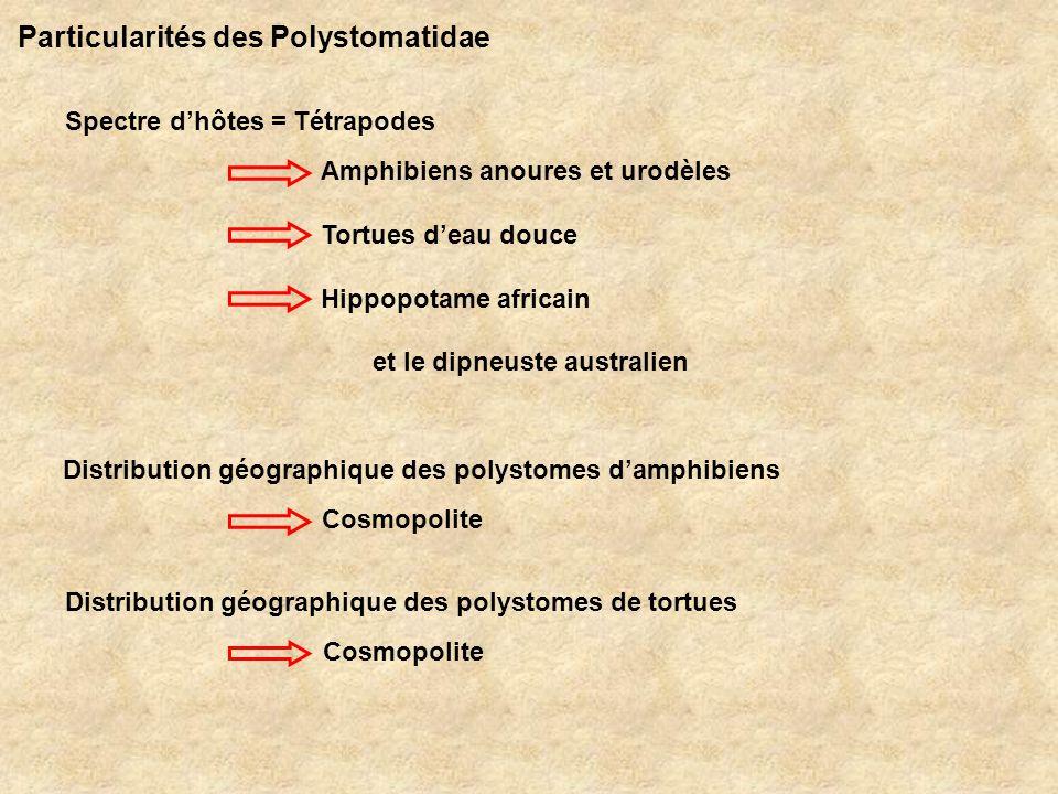 Particularités des Polystomatidae