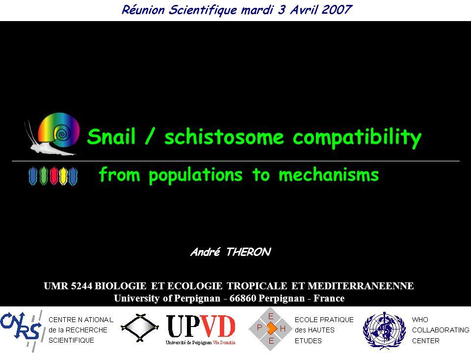 Snail / schistosome compatibility