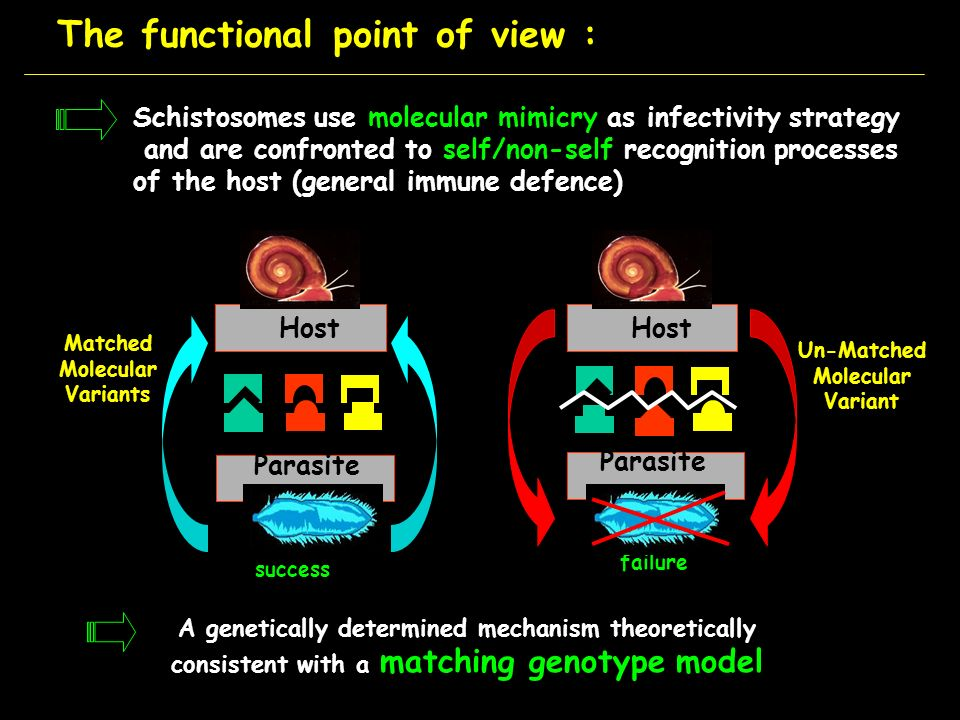 The functional point of view :