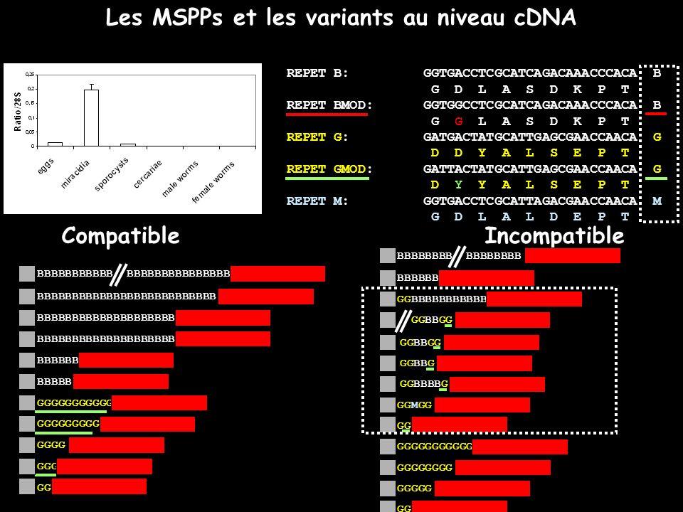 Les MSPPs et les variants au niveau cDNA