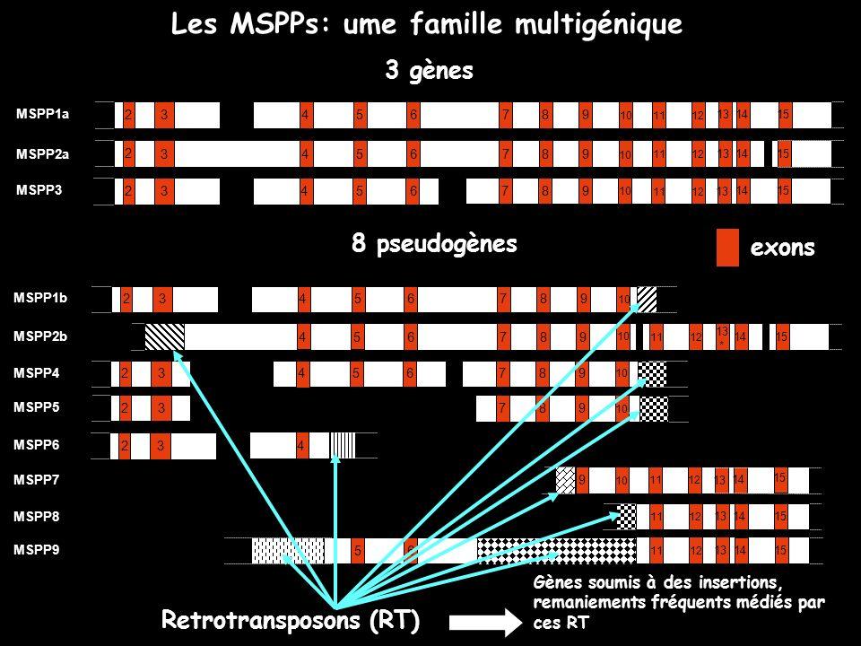 Les MSPPs: ume famille multigénique