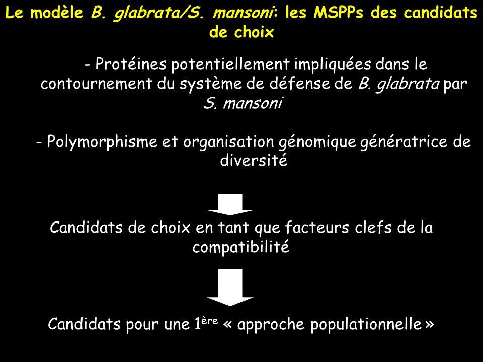 Le modèle B. glabrata/S. mansoni: les MSPPs des candidats de choix