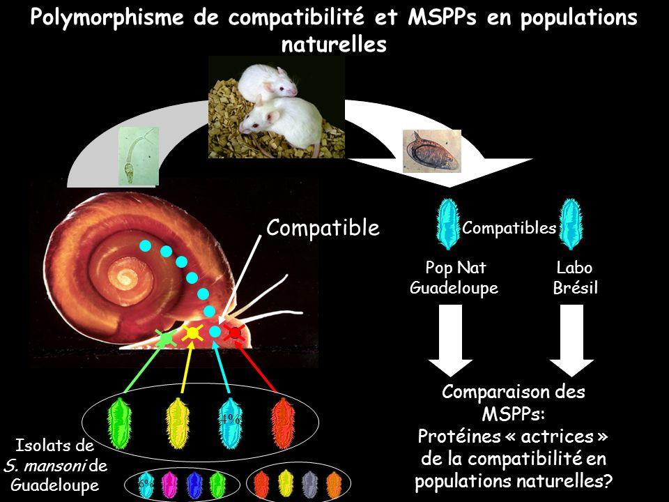 Polymorphisme de compatibilité et MSPPs en populations naturelles