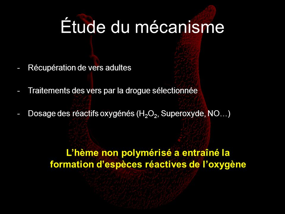 Étude du mécanisme Récupération de vers adultes. Traitements des vers par la drogue sélectionnée.