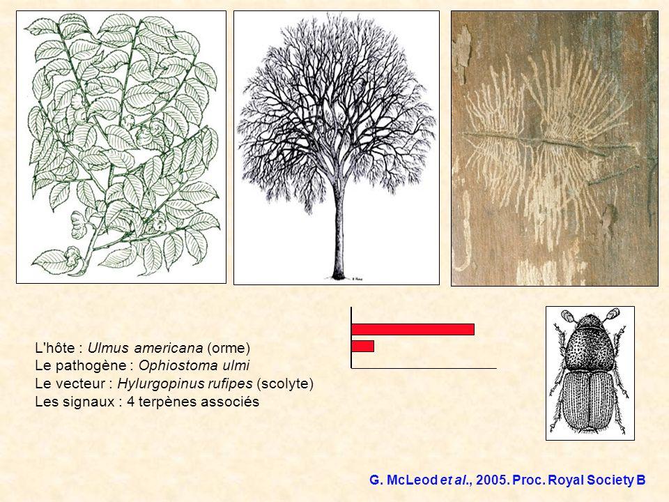 L hôte : Ulmus americana (orme) Le pathogène : Ophiostoma ulmi