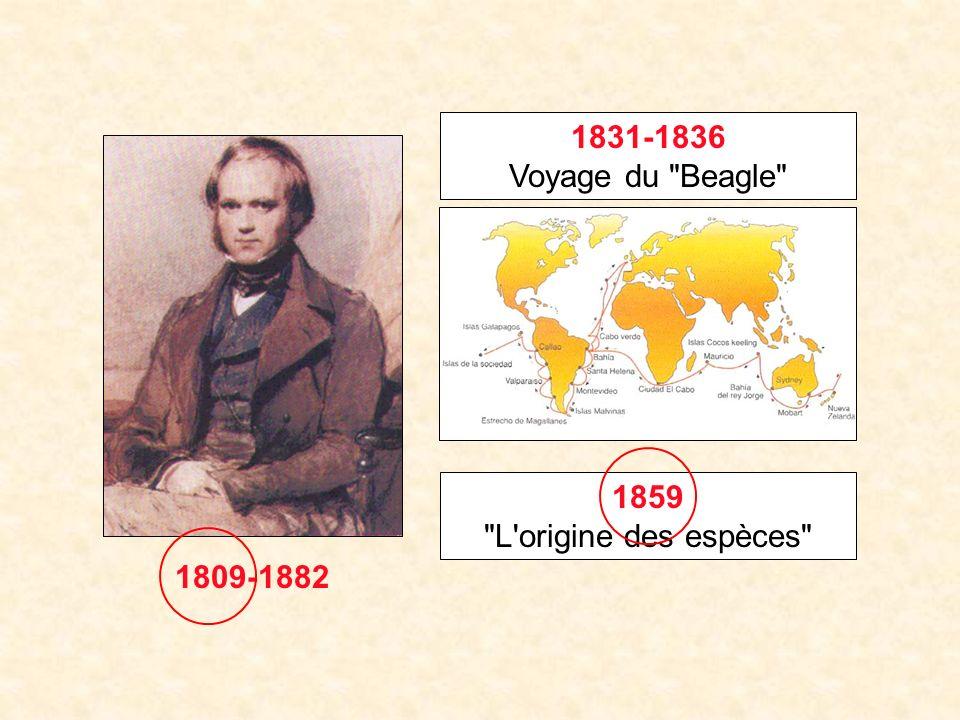 1831-1836 Voyage du Beagle 1859 L origine des espèces 1809-1882