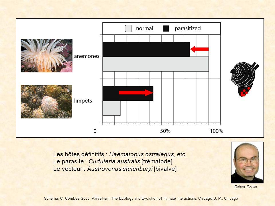 Les hôtes définitifs : Haematopus ostralegus, etc.