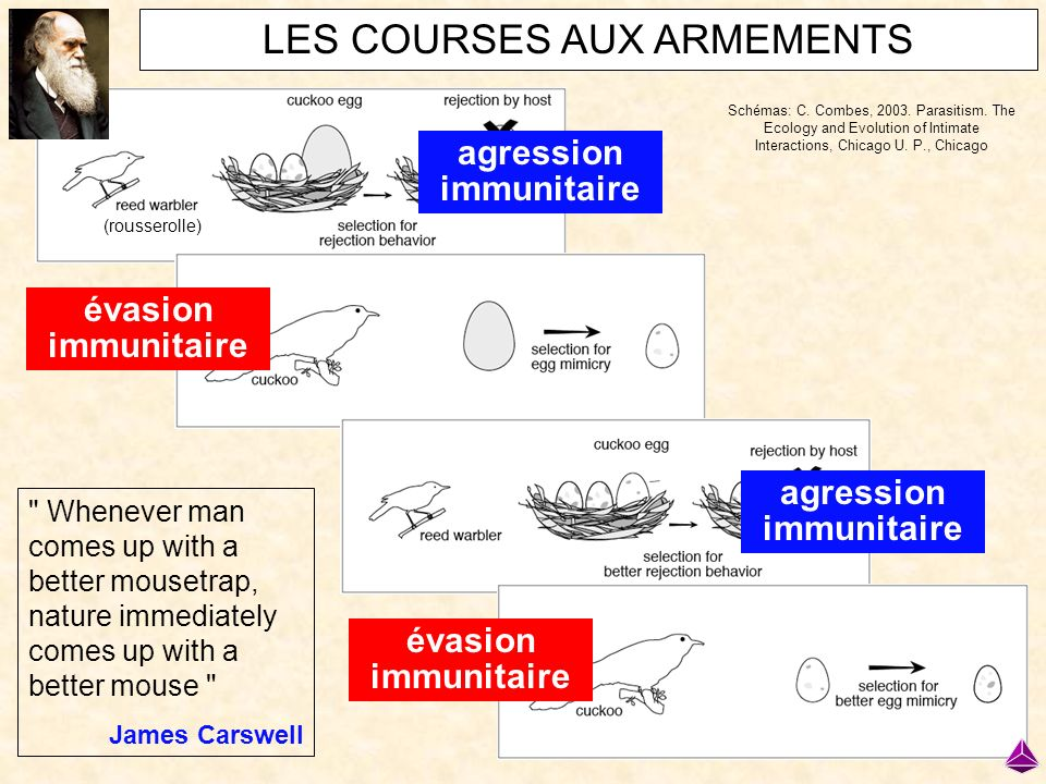 agression immunitaire agression immunitaire