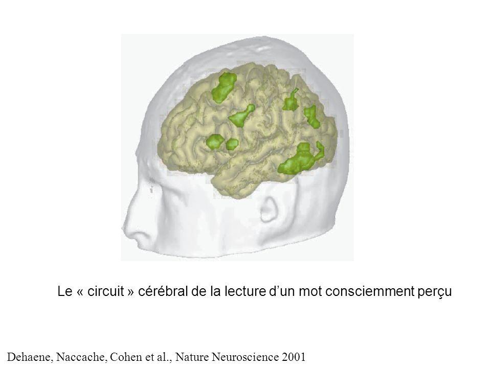 Le « circuit » cérébral de la lecture d'un mot consciemment perçu