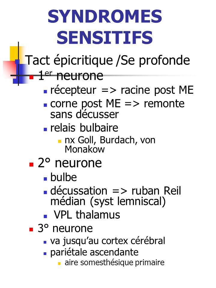 SYNDROMES SENSITIFS Tact épicritique /Se profonde 1er neurone