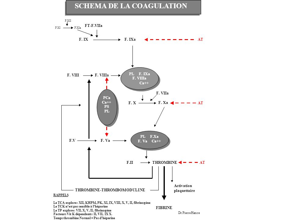 SCHEMA DE LA COAGULATION