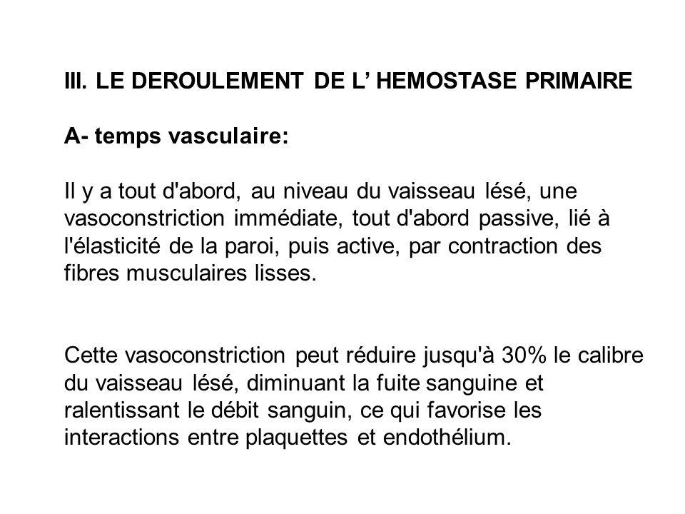 III. LE DEROULEMENT DE L' HEMOSTASE PRIMAIRE