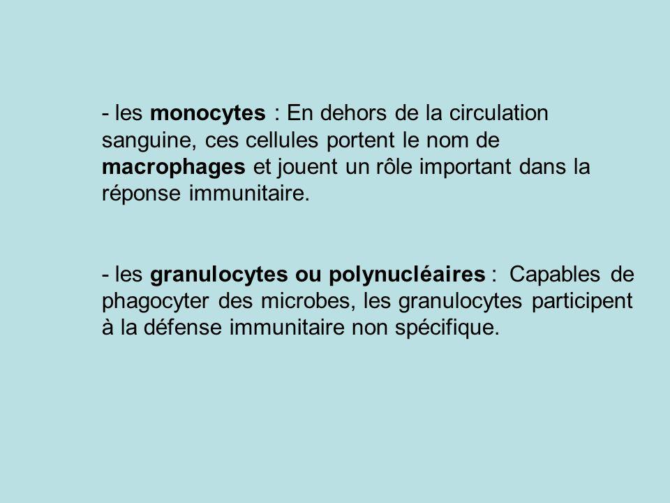 - les monocytes : En dehors de la circulation sanguine, ces cellules portent le nom de macrophages et jouent un rôle important dans la réponse immunitaire.