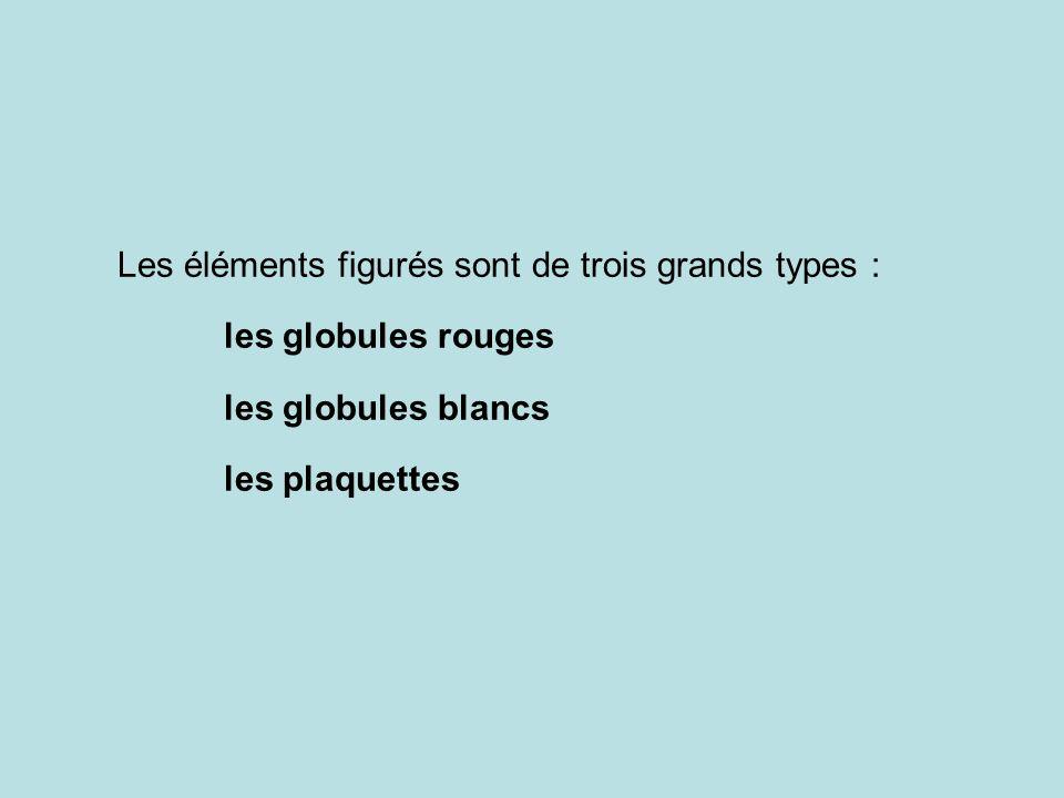 Les éléments figurés sont de trois grands types :
