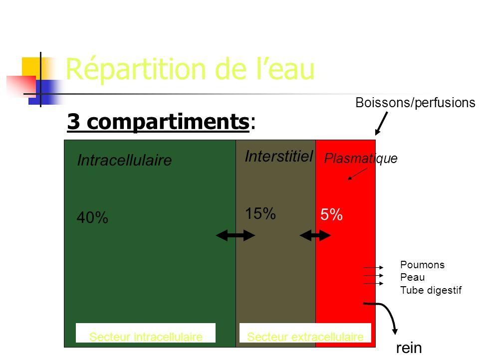 Répartition de l'eau 3 compartiments: Interstitiel Intracellulaire 15%
