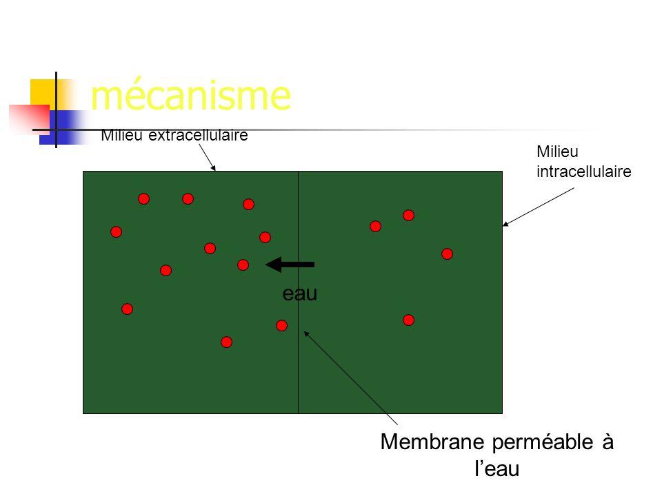 Membrane perméable à l'eau