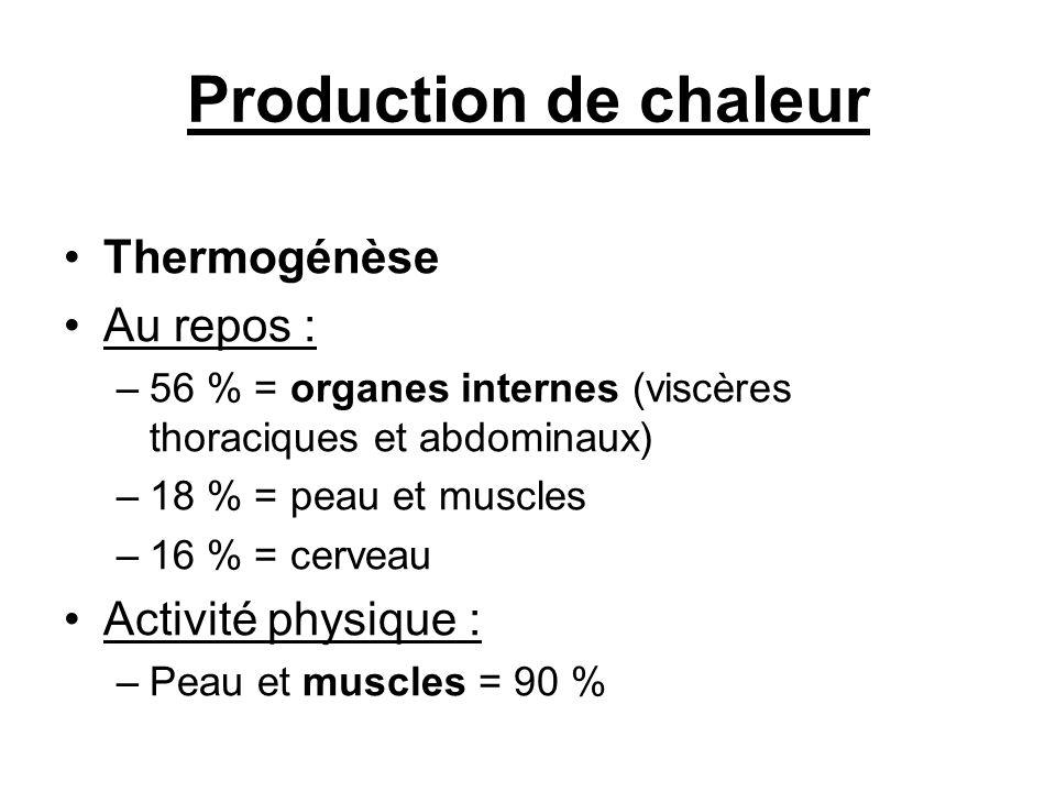 Production de chaleur Thermogénèse Au repos : Activité physique :