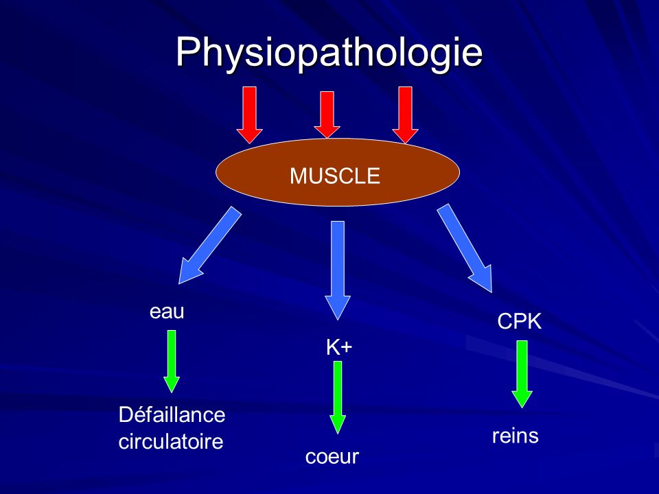Physiopathologie MUSCLE eau CPK K+ Défaillance circulatoire reins