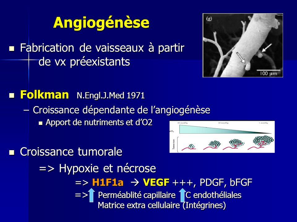 Angiogénèse Fabrication de vaisseaux à partir de vx préexistants