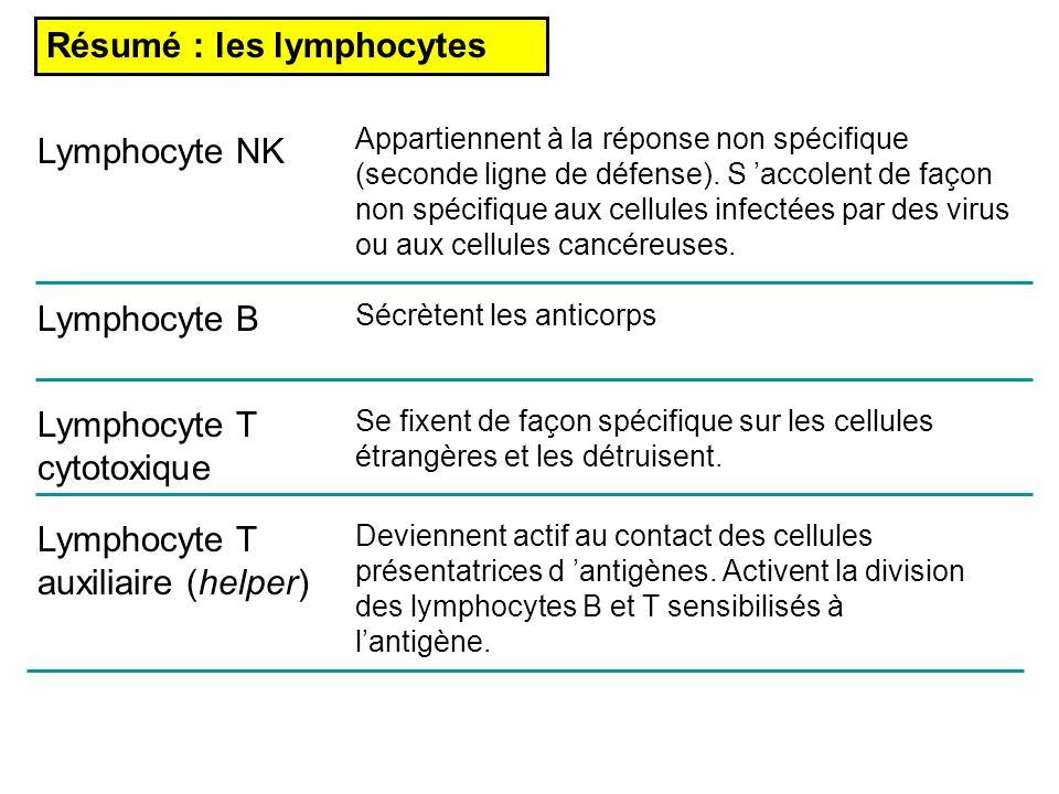 Résumé : les lymphocytes