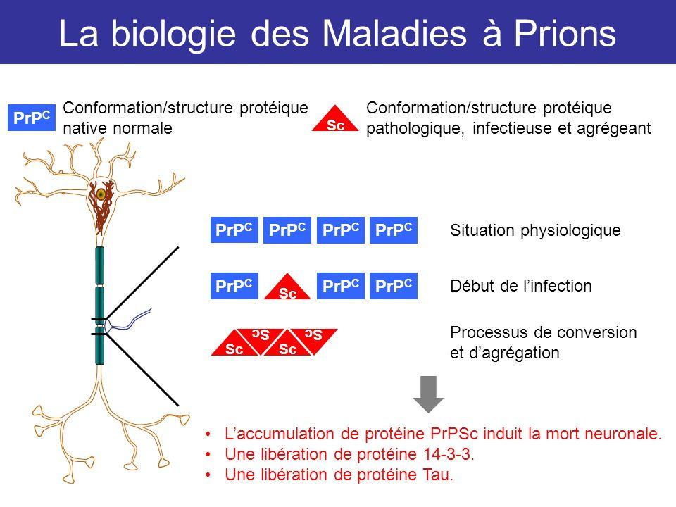 La biologie des Maladies à Prions