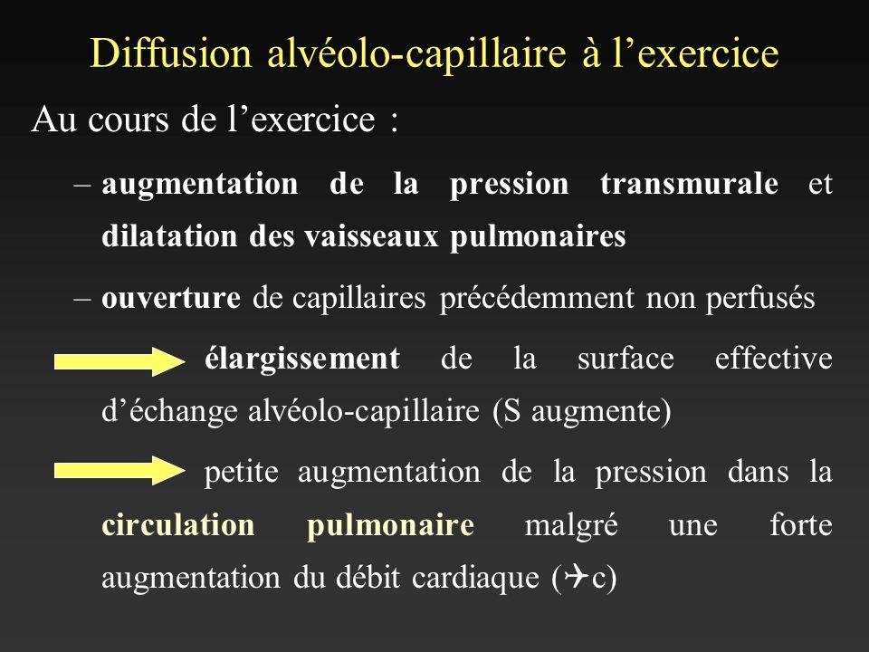 Diffusion alvéolo-capillaire à l'exercice