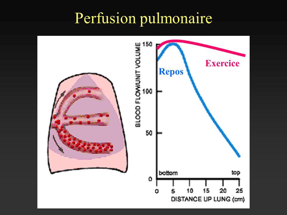 Perfusion pulmonaire Exercice Repos