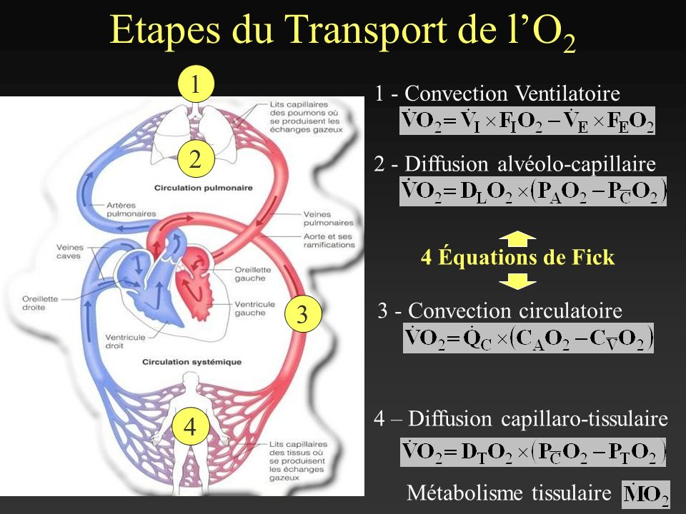 Etapes du Transport de l'O2