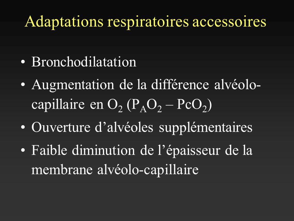 Adaptations respiratoires accessoires