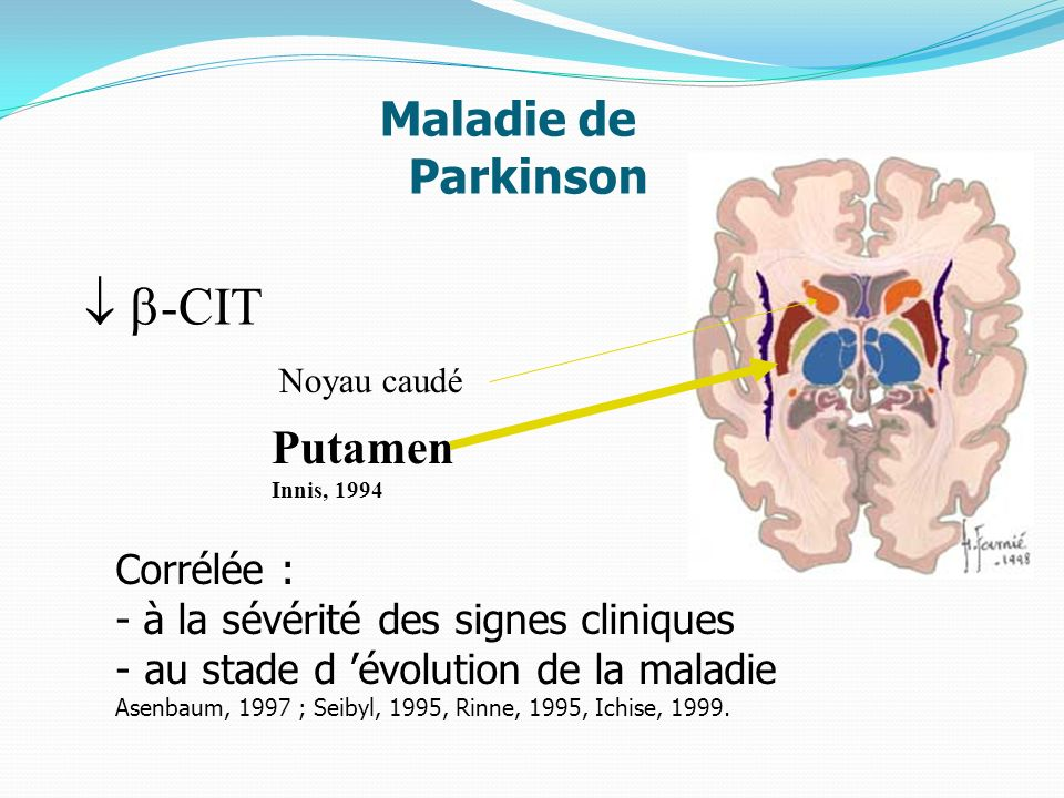  -CIT Maladie de Parkinson Putamen Innis, 1994 Corrélée :