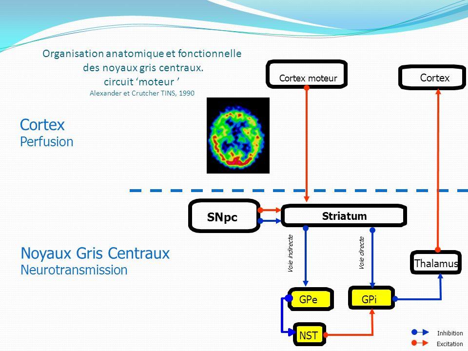 Cortex Noyaux Gris Centraux Perfusion Neurotransmission