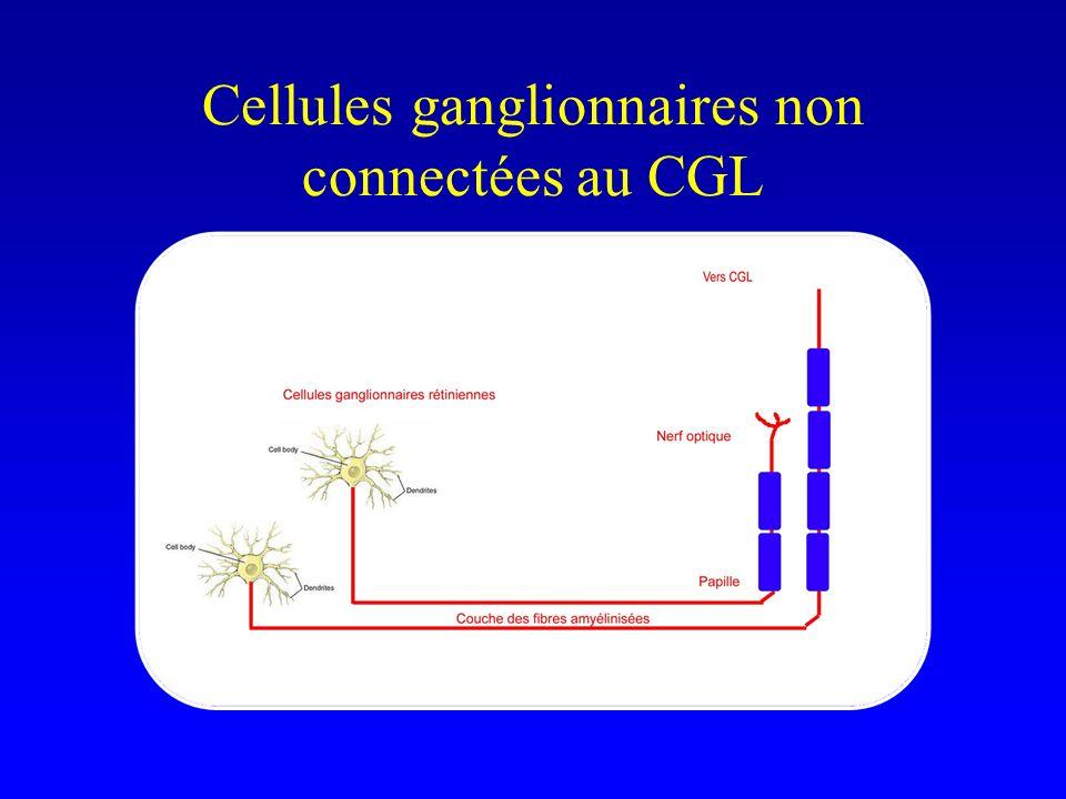 Cellules ganglionnaires non connectées au CGL