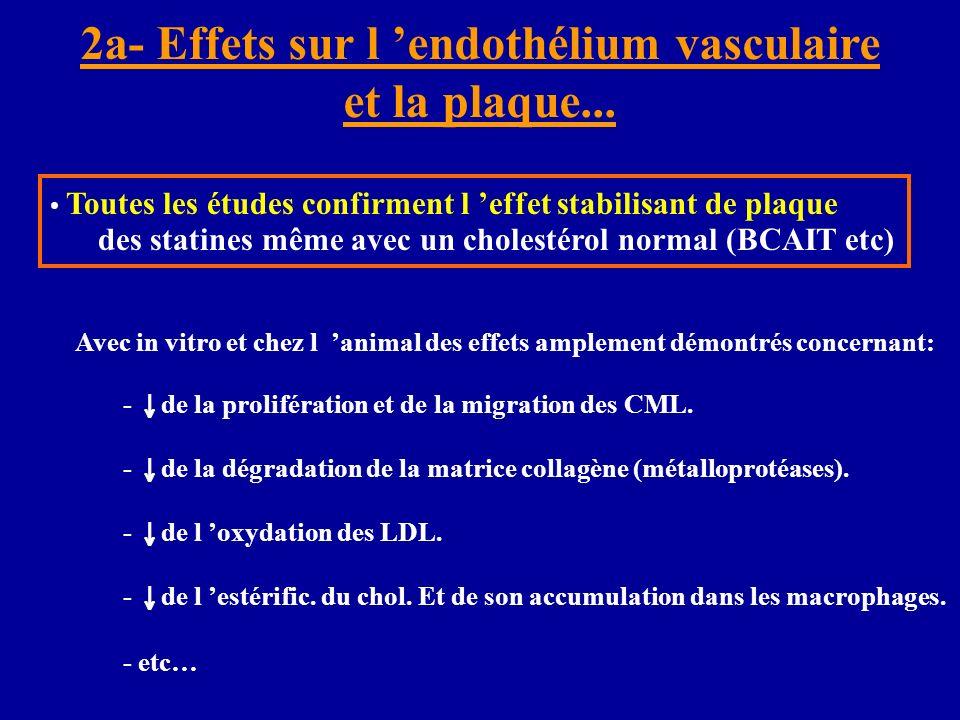 2a- Effets sur l 'endothélium vasculaire