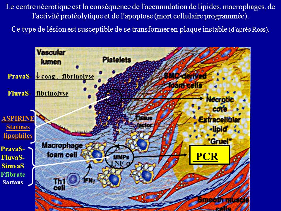 ­ PCR Thrombine Vaso- constriction