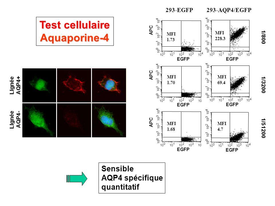 Test cellulaire Aquaporine-4