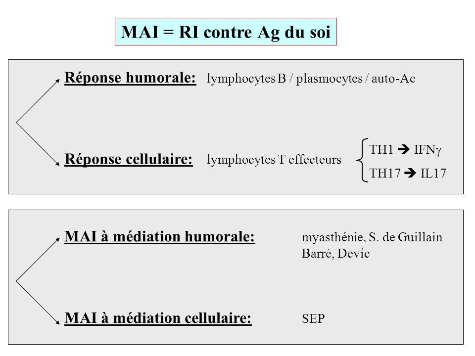 MAI = RI contre Ag du soi Réponse humorale: lymphocytes B / plasmocytes / auto-Ac. Réponse cellulaire: lymphocytes T effecteurs.