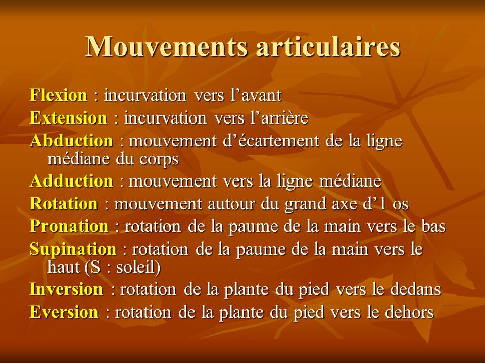 Mouvements articulaires
