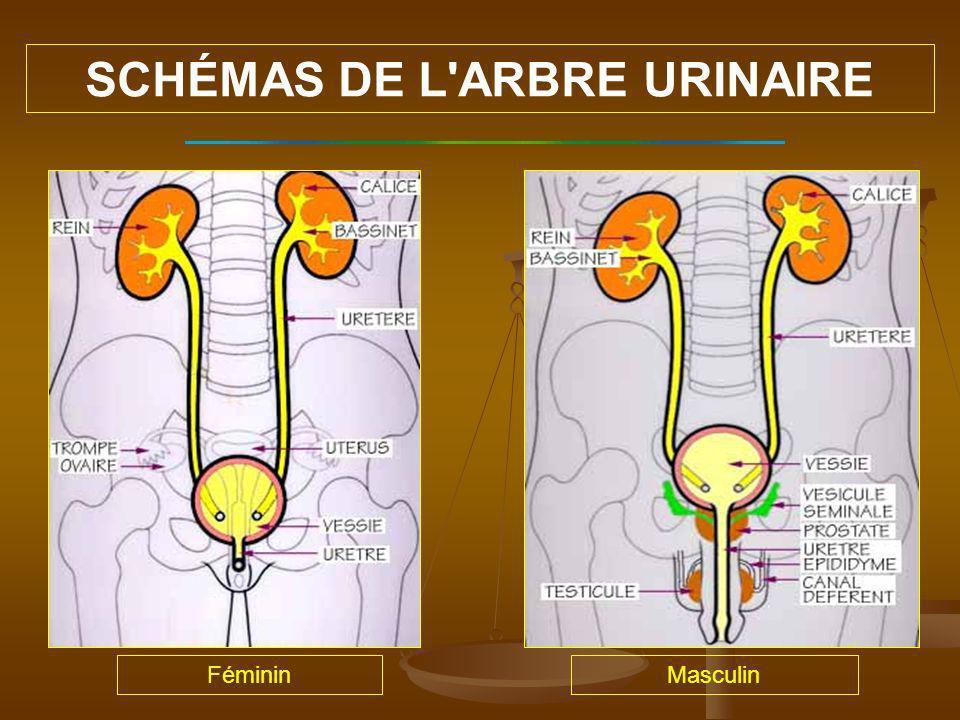SCHÉMAS DE L ARBRE URINAIRE