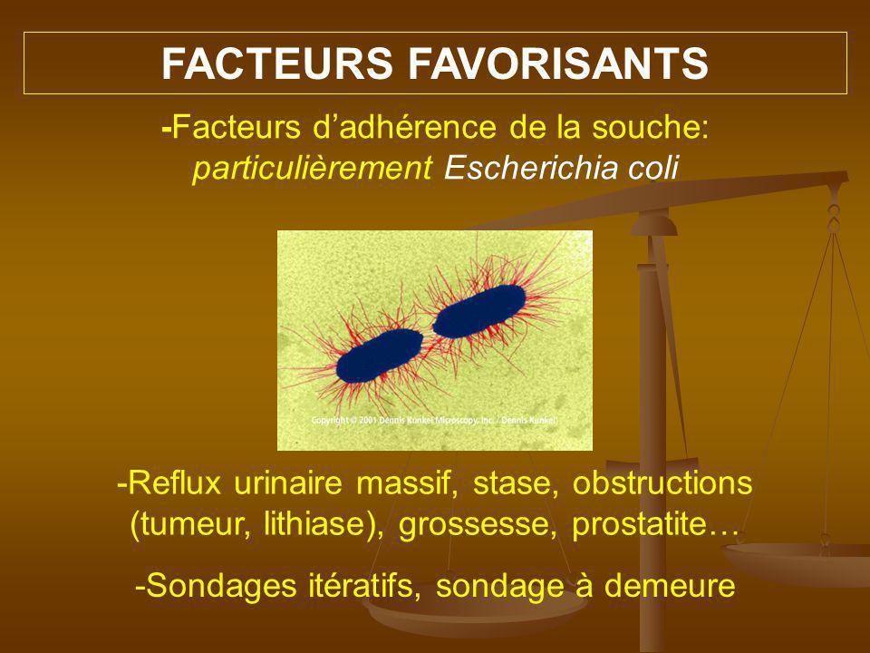 FACTEURS FAVORISANTS -Facteurs d'adhérence de la souche: