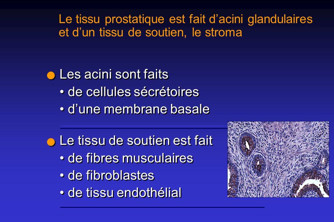 Les acini sont faits • de cellules sécrétoires • d'une membrane basale