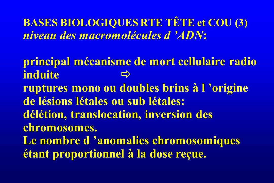 BASES BIOLOGIQUES RTE TÊTE et COU (3) niveau des macromolécules d 'ADN: principal mécanisme de mort cellulaire radio induite  ruptures mono ou doubles brins à l 'origine de lésions létales ou sub létales: délétion, translocation, inversion des chromosomes.