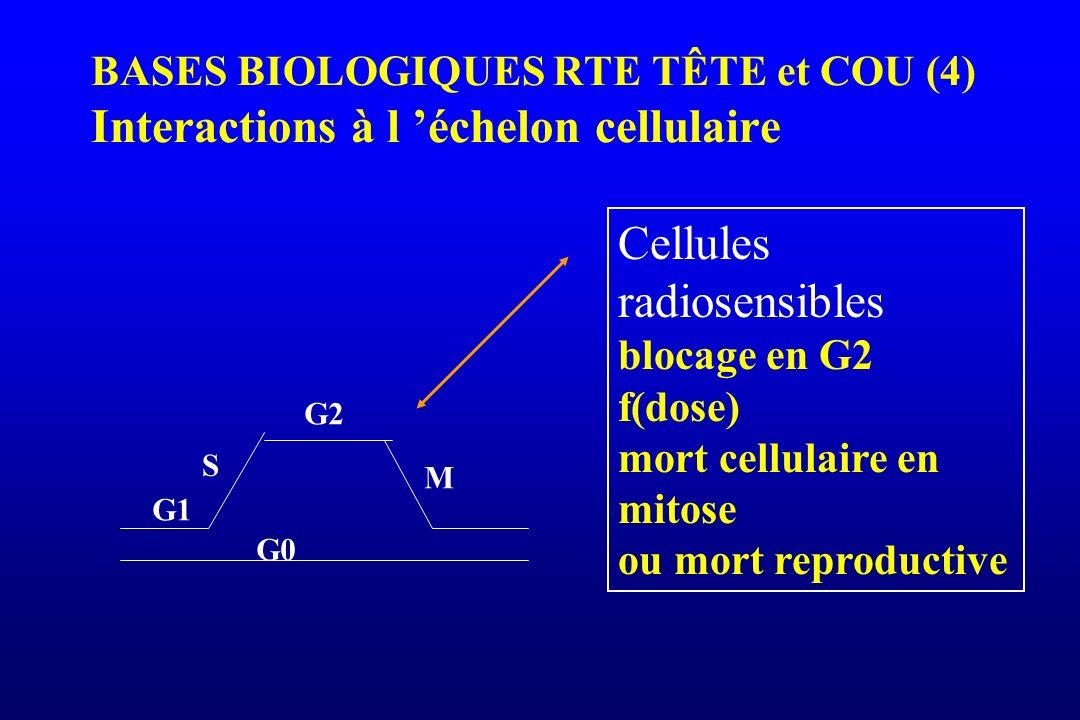 Cellules radiosensibles