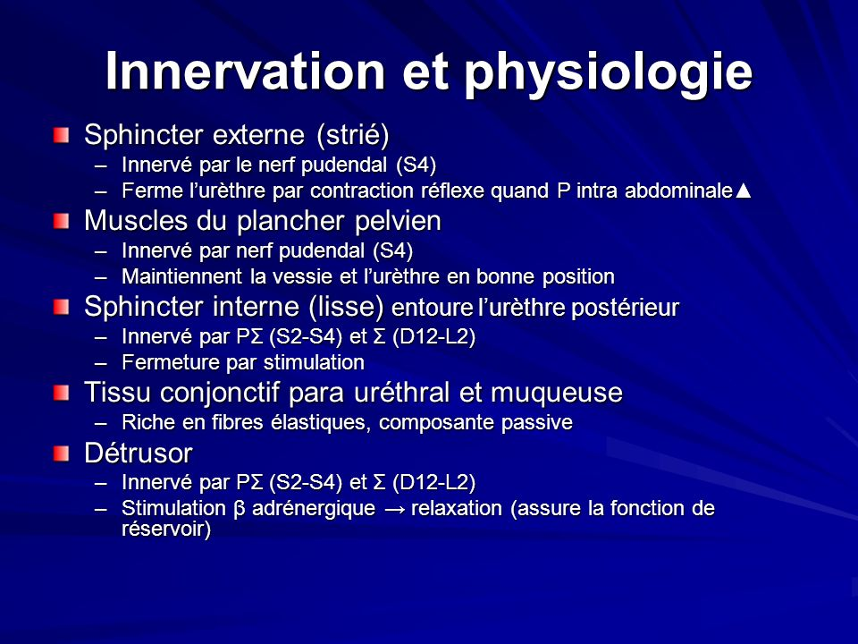 Innervation et physiologie