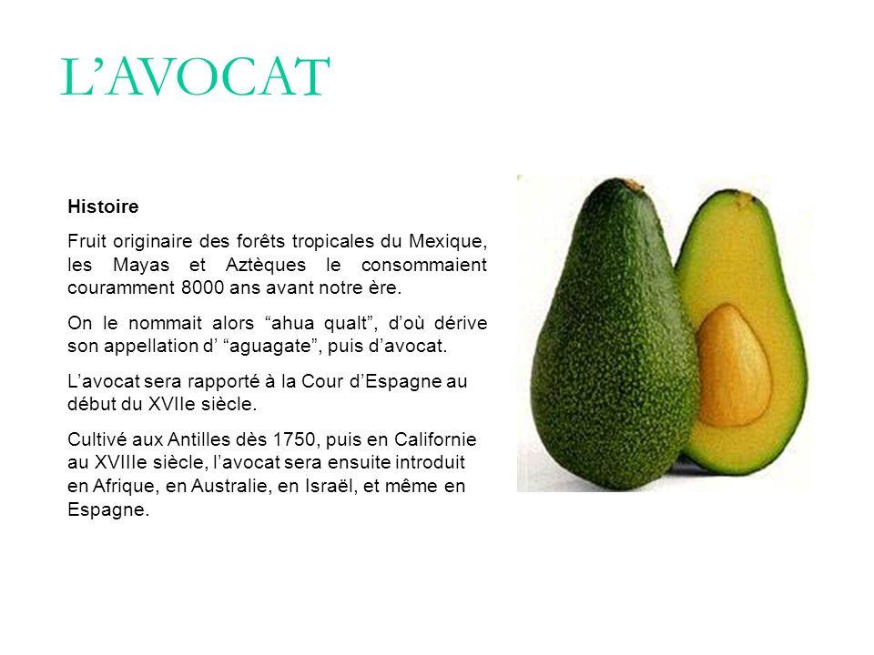L'AVOCAT Histoire. Fruit originaire des forêts tropicales du Mexique, les Mayas et Aztèques le consommaient couramment 8000 ans avant notre ère.