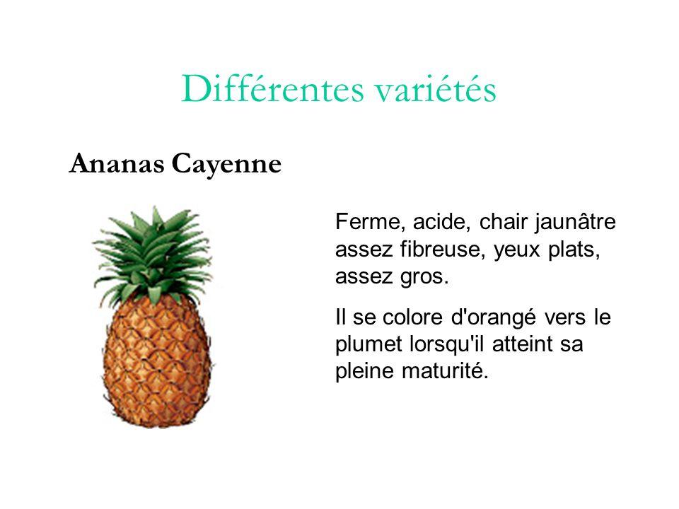 Différentes variétés Ananas Cayenne