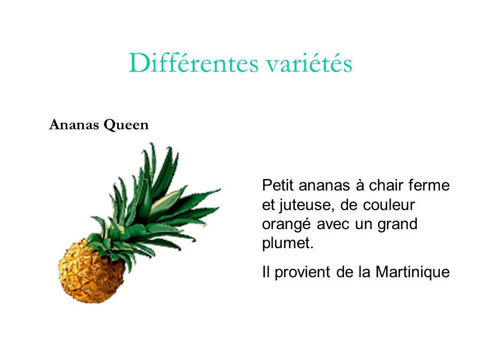 Différentes variétés Ananas Queen