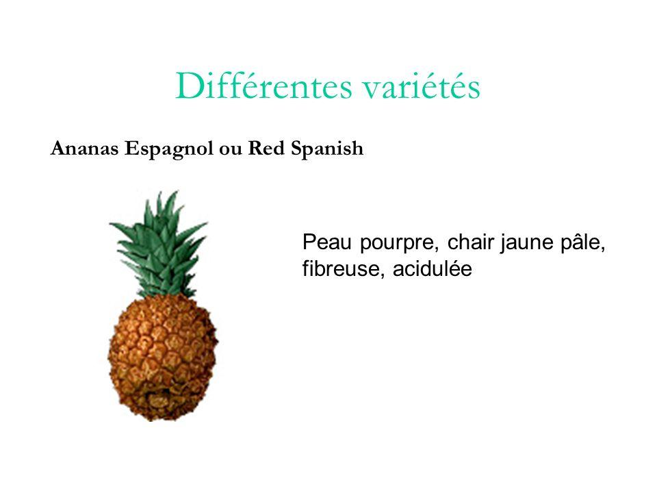 Différentes variétés Ananas Espagnol ou Red Spanish